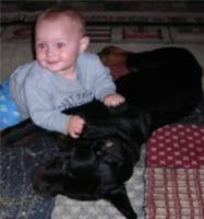 baby playing with rottweiler
